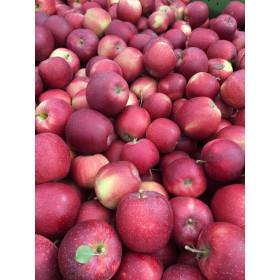 Äpfel Gala 1,5kg