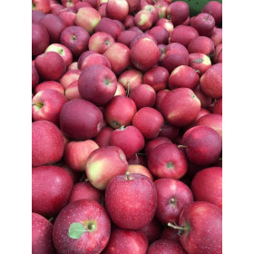 Äpfel Gala 3kg