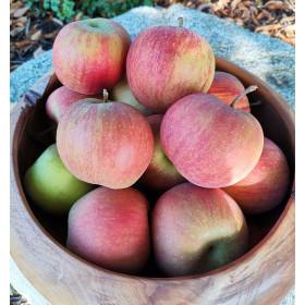 Äpfel (Rubinette) 1kg