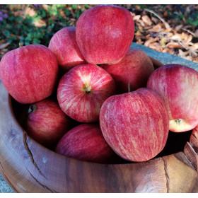 Äpfel (Gala-Kinderapfel) 1kg