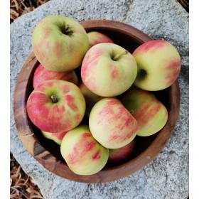 Äpfel (Elstar) 5kg