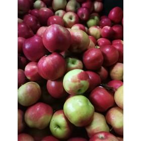 Äpfel (Idared) 1kg