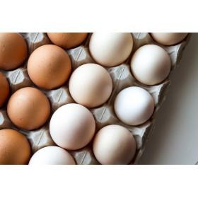 Freiland-Eier 10 Stk.