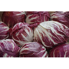 Radicchio Salat Stk.