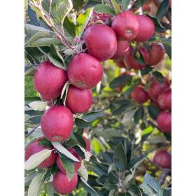 Äpfel Braeburn 3kg