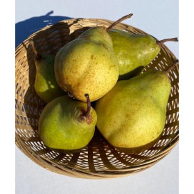 Birnen (Packhams) 3kg